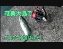 第100位:『奄美大島』サバに遊ばれた thumbnail