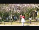 【ひな】初恋の絵本を踊ってみた【桜】