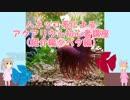ハネッコ系によるアクアリウム初心者講座(紹介編⑤ベタ編) thumbnail