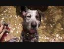ファークライ5のプレイ動画です Part1 ジョンの地区 ホランドバレー 人間の最良の友(PS4Pro)