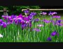 【MEIKO】Iris【オリジナル曲】