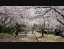 平成30年姫路城・桜