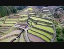 第64位:棚田と桜~癒し系空撮~1080P thumbnail