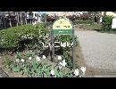 広し三鷹駅 藤が咲きだした花まつりの関前四丁目公園