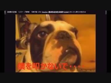 最近都内の駅などで、福島で飼い主がいなくなった …