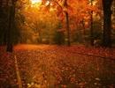 枯葉が舞い落ちる音と木枯らしの音(睡眠用BGM・作業用BGM)