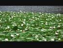 【KAITO】水辺の花たち【オリジナル曲】