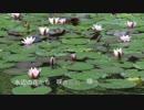 【KAITO MEIKO】水辺の花たち【オリジナル曲】