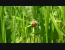 春の遠足 インストゥルメンタル オリジナル曲PV