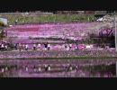 VTR-Fに乗って國田家の芝桜を見に行ってきた