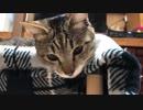 用もないのに名前を呼ばれて不機嫌な猫