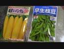 サキヤマがやる!初めての家庭菜園(枝豆・トウモロコシ編)1