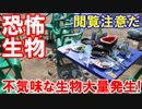 【韓国に不気味な生物が大量発生】 漢江で恐ろしい噂が広まっている!こ...