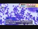 感染拡大で対策本部 福岡県で「はしか」6人に