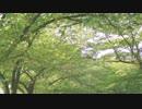 【BASARALOID】夢と葉桜【尼子晴久】