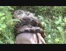 シカを丸呑みするニシキヘビ