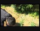 【カレハン畑】野菜の苗を買って畑に植える!【Re:カレーライスを一から作る】(20180522放送)#2/3