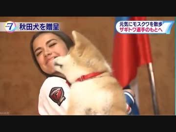 犬 ザギトワ 秋田