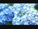 Blue Regret GARNET CROW (Confetti Concertoカバー)