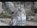 鳴いて求愛を求めるユキヒョウさん(多摩動物公園)
