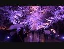 【四国一周への道】 第1幕・新潟の桜と富山の