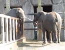 東武動物公園 ゾウの水飲み