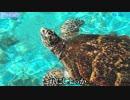 2泊3日沖縄大満喫レース Part14「ウミガメ編」