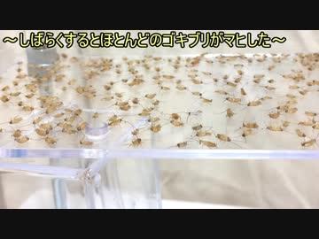ハッカ 油 蟻
