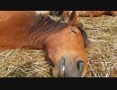 熟睡している馬