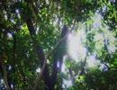 第70位:【木漏れ日の動画バージョン】小鳥のさえずり《10分》(睡眠用BGM・作業用BGM)