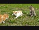 第83位:野良猫の縁が切れる瞬間があまりにも突然やってきて驚いた thumbnail