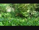 家の裏の自然が生い茂っていた