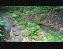 神武寺・鷹取山ハイキングコース(池子石切り場から神武寺へ向かう沢沿いの雰囲気の良い登山道)