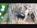 第49位:【紲星あかり】クワガタを探しに河川敷へ!【と休日は遊びましょう!】 thumbnail