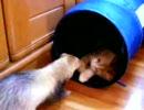 子猫 VS フェレット EX Stage2