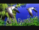 Relaxing Ambient Music - Walking with birds - ACE Fantasy
