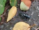 昆虫シリーズ 人影から逃げるカミキリムシ