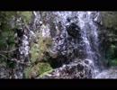 大蜘蛛伝説の残る天蔵滝に行ってきた!!林道からのノンストップ・プチ・アドベンチャー!実況しながら滝を目指します!!