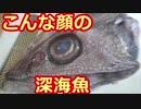 051 【料理】 深海魚トウジン 【食べてみた】