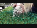 (∪´・ω・)→(∪^ω^)捨て犬保護シリーズ 70
