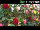 【ニコニコ動画】栃木イメージアップの旅 4を解析してみた