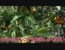 【VOICEROID実況プレイ】琴葉姉妹の100%Orange Juice実況プレイ 1杯目