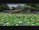 夏の京都(2018/8/13)