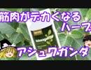 第45位:ゆっくりサプリレビュー 04 「アシュワガンダ」