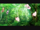 【作業用環境音】セヤ蝉・アカネ蝉・マキ蝉・ユカリ蝉大合唱【第四回ひじき祭りの終わりに】