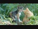 野良子猫が何かを会話しているところに思いっきり接近してみた
