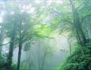 【決戦!ドカポン王国Ⅳ】迷いの森《100分間耐久》