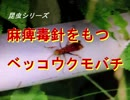 昆虫シリーズ 麻痺毒針をもつベッコウクモバチ