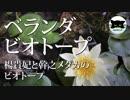 【ベランダビオトープ】楊貴妃と幹之メダカのビオトープ