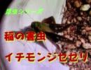 昆虫シリーズ 稲の害虫 イチモンジセセリ